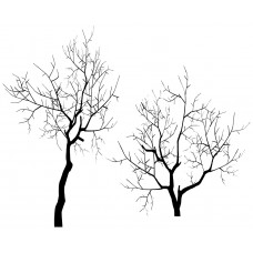 Tree Branch black White Graphics Design-JY22