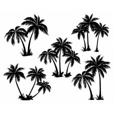 Coconut tree Tropical plants black White Graphics Design-JY26