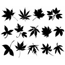 Leaf plants Tree black White Graphics Design-JY27