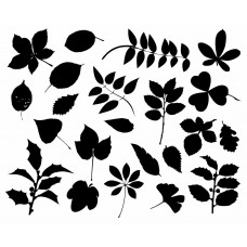 Leaf plants Tree black White Graphics Design-JY29