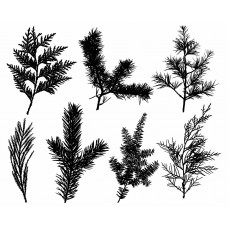 Leaf plants Tree Pine black White Graphics Design-JY30