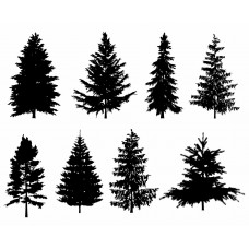 Pine Tree black White Graphics Design-JY37