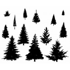 Pine Tree black White Graphics Design-JY38