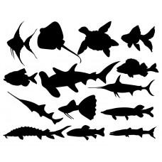 Ocean Animal Fish Tortoise Shark black White Graphics Design-JY41