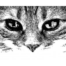 Cat head Animal black White Graphics Design-JY55