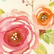 Plant & Flower (0)